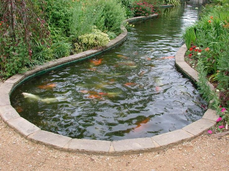 Caring For Your Fish Pond Real Estate Photos Marketing